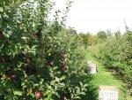 Sad pełen owoców